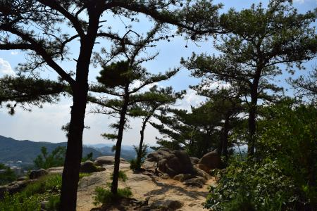 Alberi e rocce
